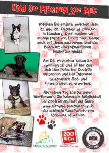 Flyer Rückseite Haustier Fotoaktion